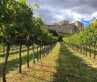 10th September 2020<br>Corriere del Vino