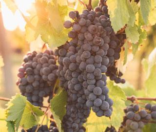 17th September 2020<br>WineMag.it